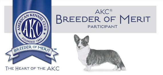AKC Breeder of Merit, Lori Frost Ventura County, California