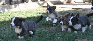 Glasshouse Kennel, is Lori Frost.